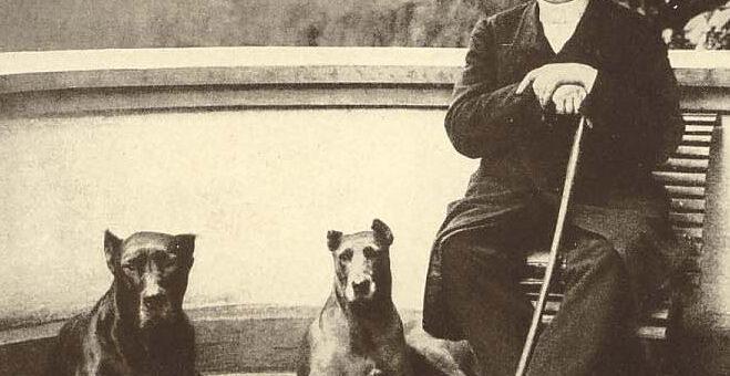L'Alano: il cane dei nobili