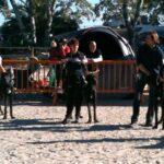 Risultati Expo Raduno Alani Anguillara Sabazia