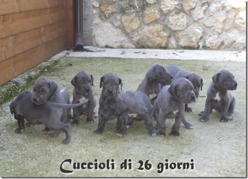 cuccioli2009fuori9