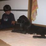 Cucciolo di Alano: istruzioni e uso