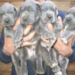 Aggiornamento foto dei cuccioli ad un mese di età