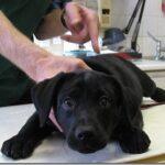 Le vaccinazioni dei cuccioli